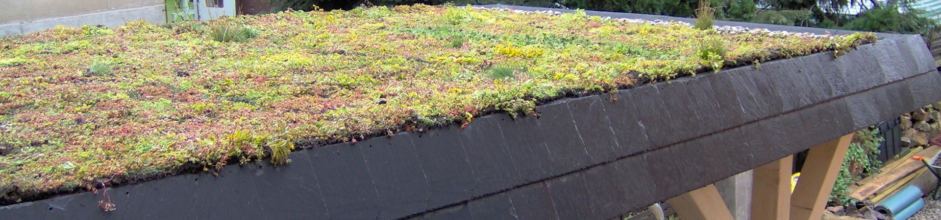Geliebte Carport mit Gründach - eine Zierde im Straßenbild im Ratgeber auf @RH_96